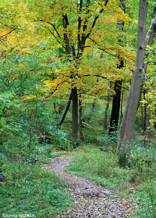 path with yellow leaves