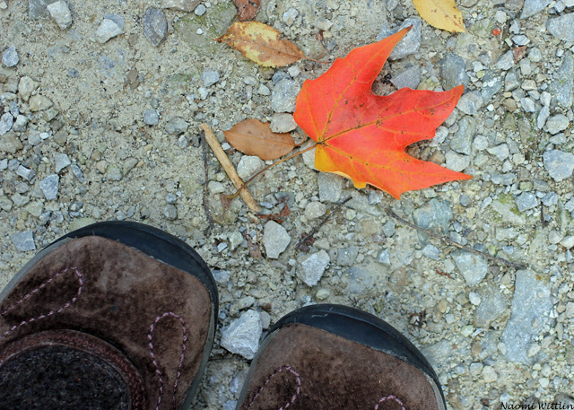 red leaf and shoes