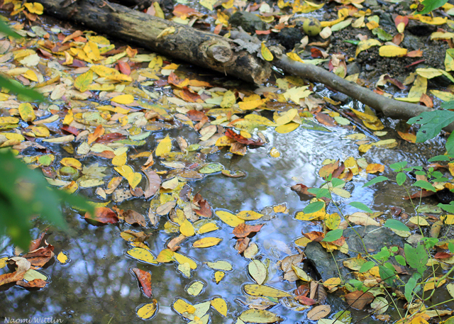 stream with leaves