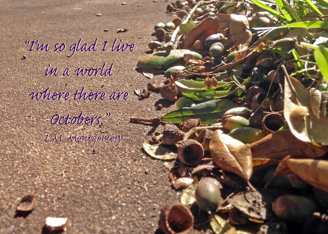 Acorns on sidewalk w quote