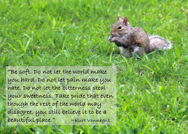 squirrel and quote