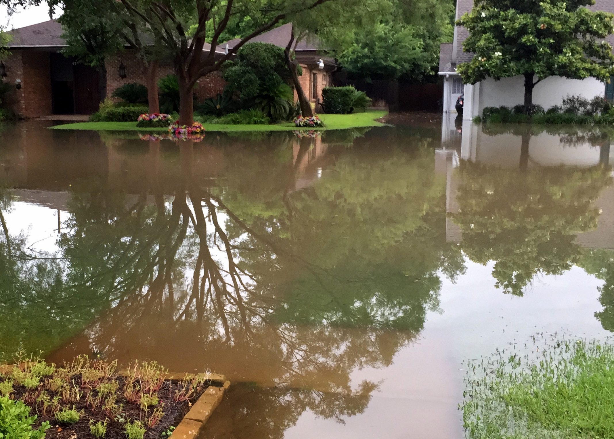 Our sidewalk, lawn, and flower beds were covered with water